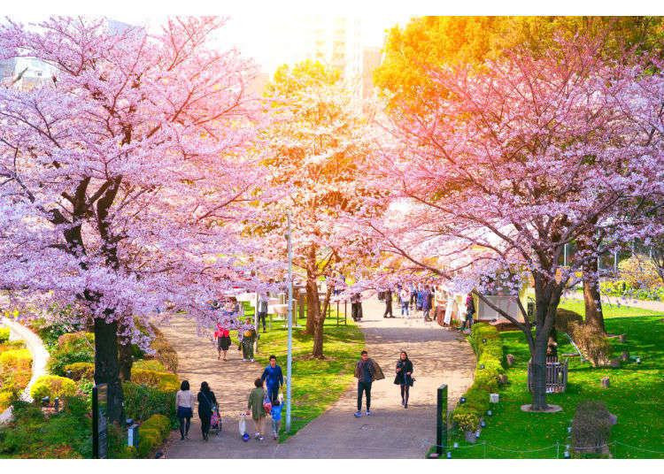 Sepuluh Tempat Terkenal Untuk Hanami (Melihat Bunga Sakura)