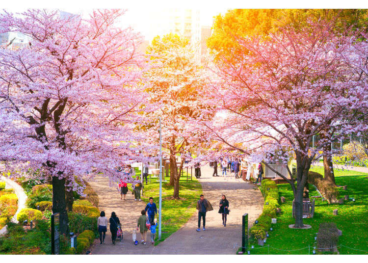 Seeing Sakura: 10 of Tokyo's Best Cherry Blossom Viewing Spots - 2019!
