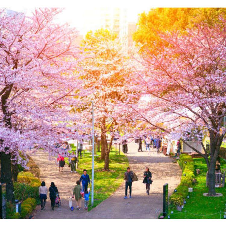 絕不能錯過的東京10大人氣賞櫻景點