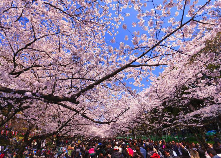 2. Ueno Park