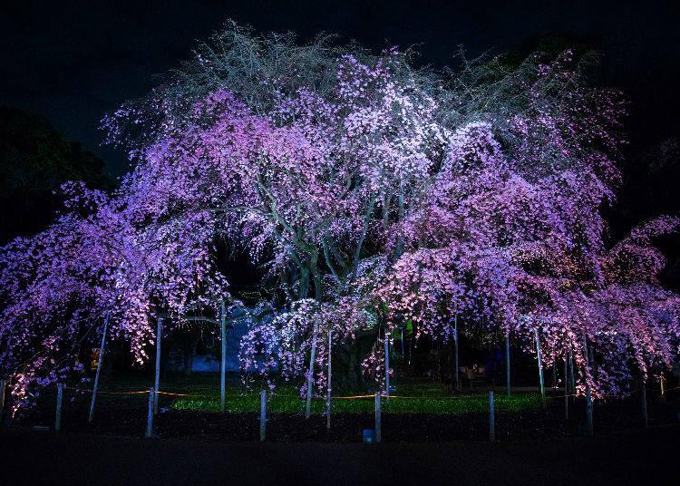 9. Rikugien Gardens