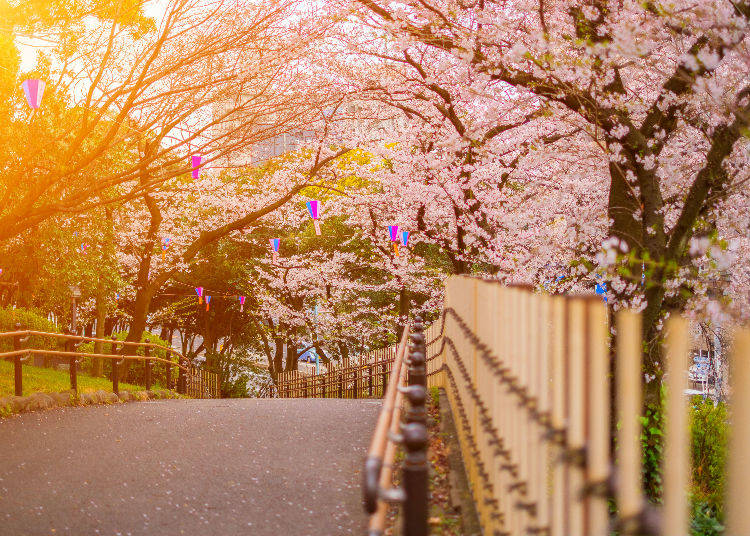 10 - Asukayama Park