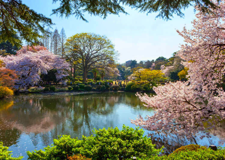 1. Shinjuku Gyoen National Garden