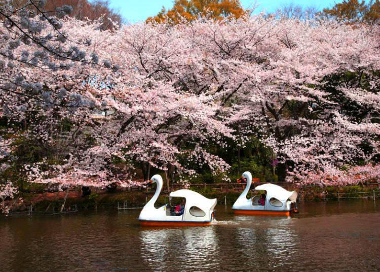 5. Inokashira Park