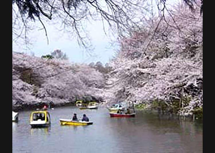 5 : 이노카시라온시 공원(이노카시라 공원)