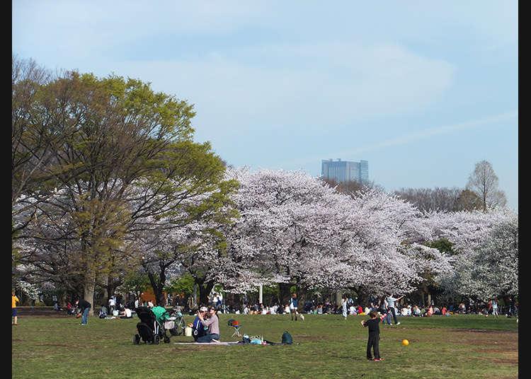 7. 요요기 공원