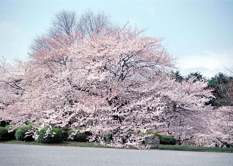 1. ชินจูกุ เกียวเอ็น (Shinjuku Gyoen National Park)
