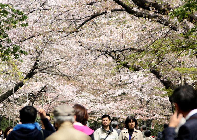 2. สวนอุเอะโนะ (Ueno Park)