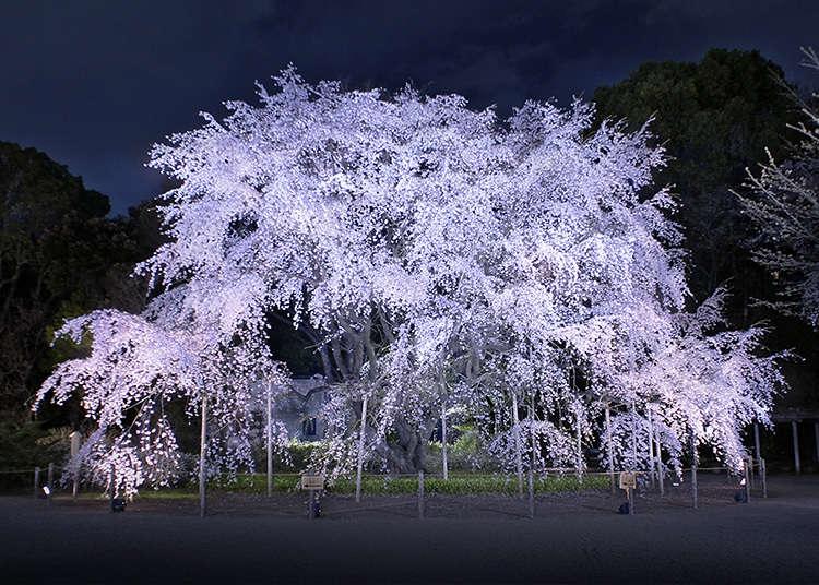 9. สวนริคุงิเอ็น (Rikugien Gardens)