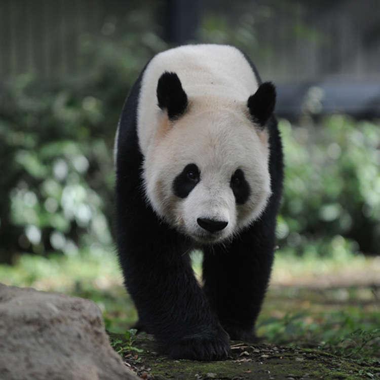 The Surroundings of Ueno Zoo - Home of the Giant Panda