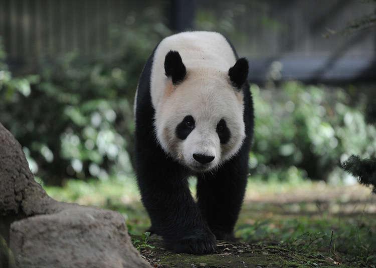 上野动物园、大熊猫区附近