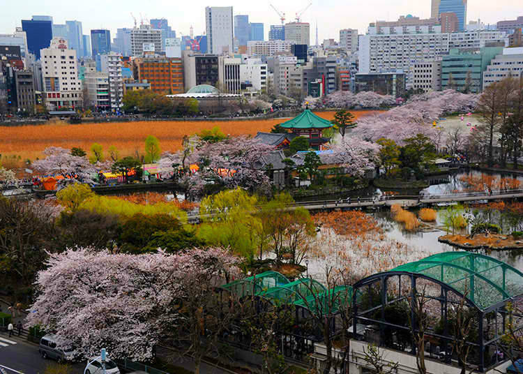 3. Why is it also called Mt. Ueno?