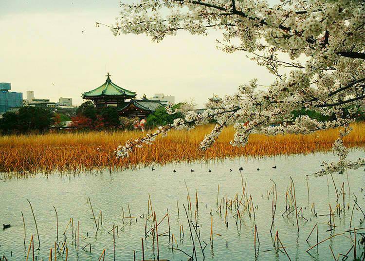 What is the island in Shinobazu Pond?