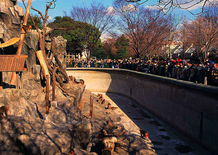 8. Why is there a zoo in Ueno Park?