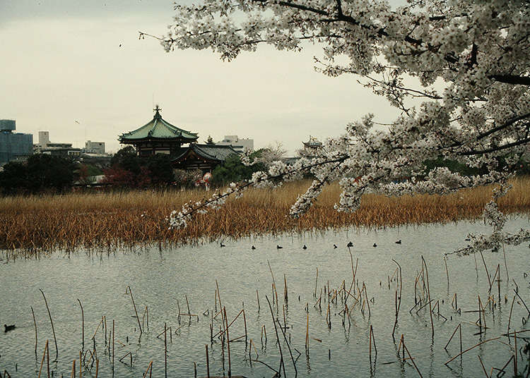 Apa Itu Pulau Shinobazu Pond?