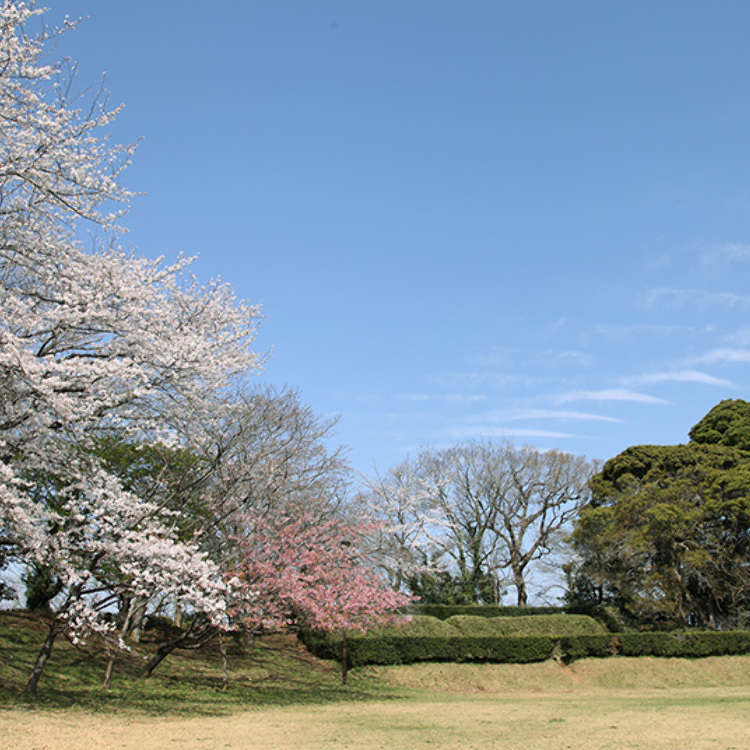Famous Cherry Blossoms at one of Japan's Top 100 Castles