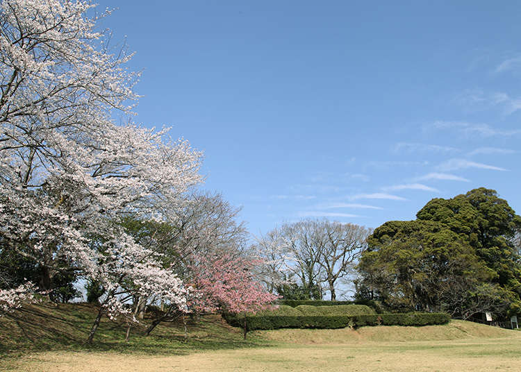 Lokasi sakura yang terkenal dan terpilih sebagai salah satu dari 100 istana terkenal Jepang
