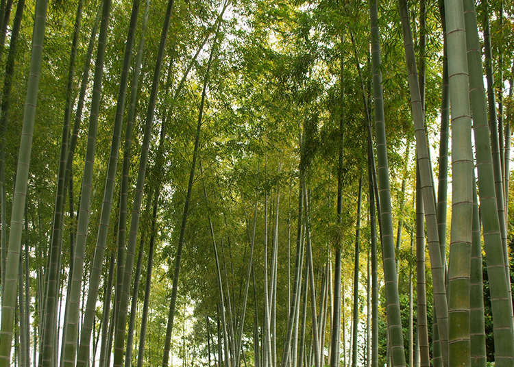 Five gardens to get to know the wabi-sabi of Japan