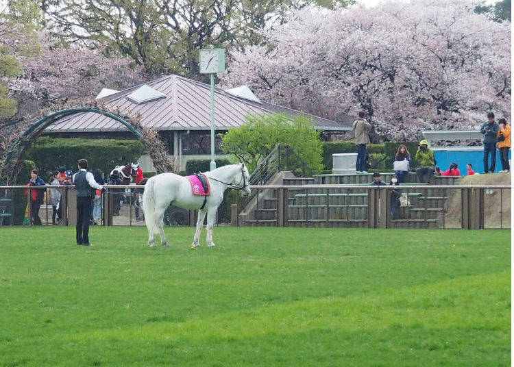 Yoga: A Place Where You Can Enjoy Seasonal Flowers and be Around Horses