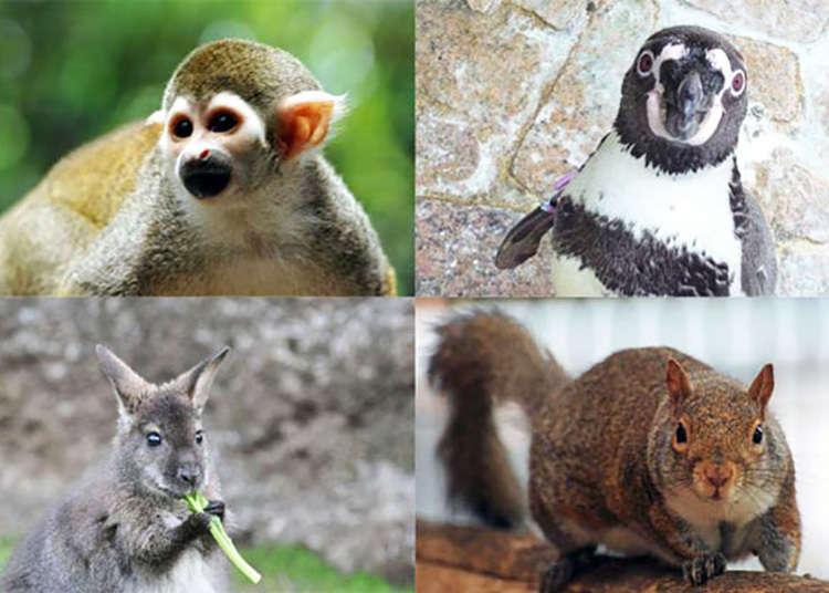 [Nishikasai] Zoo tanpa bayaran masuk pada bila-bila masa
