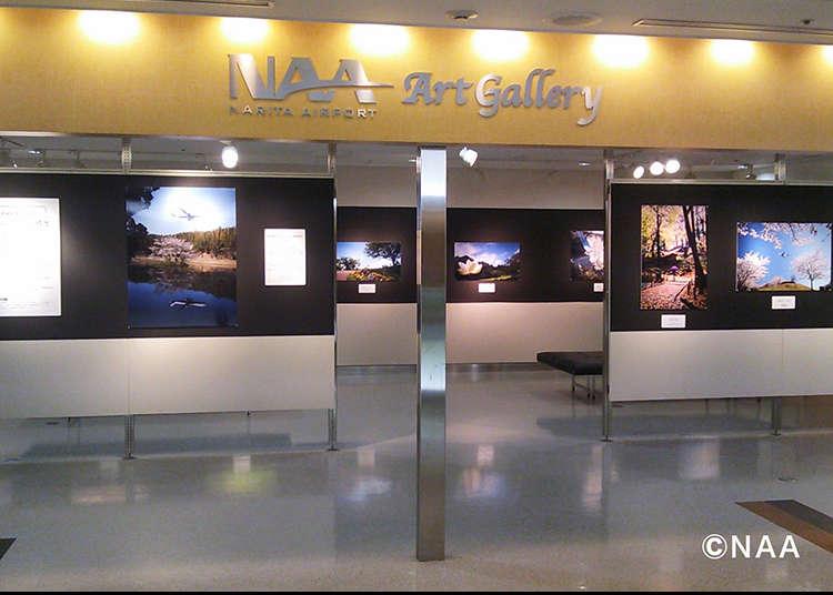 'NAA 아트 갤러리'에서 예술 감상