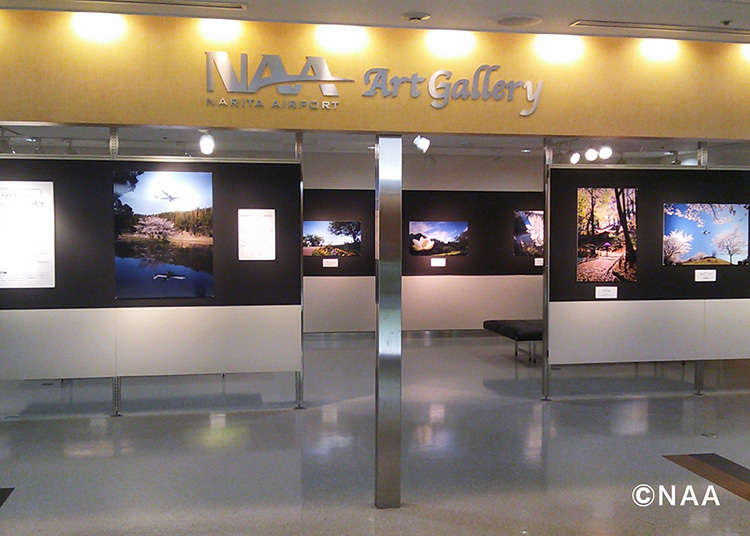 """在""""NAA艺术画廊""""欣赏艺术"""