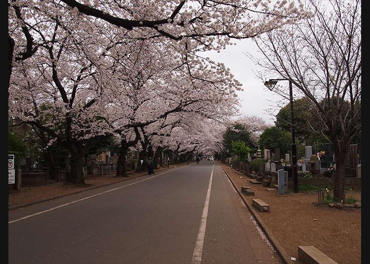 在谷中陵园散步,了解日本的坟墓