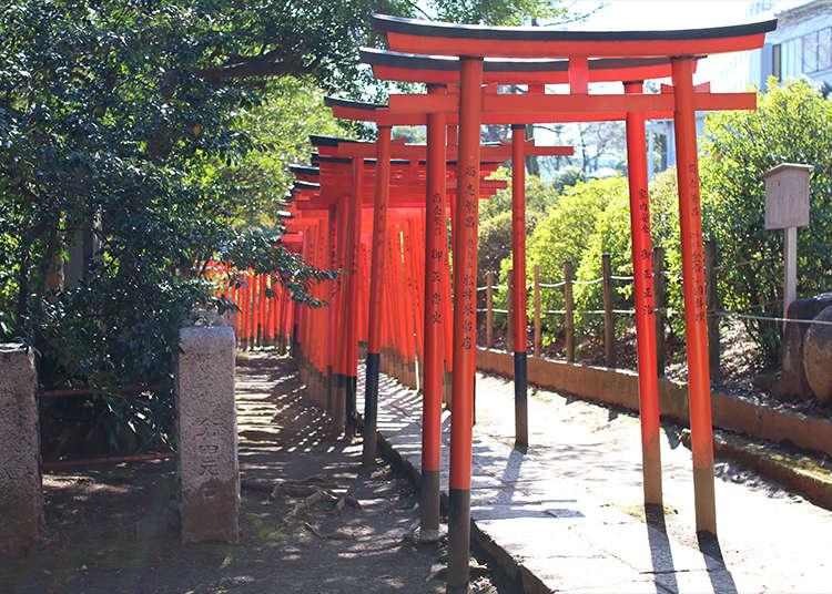 在根津神社穿越乙女稻荷的鳥居!