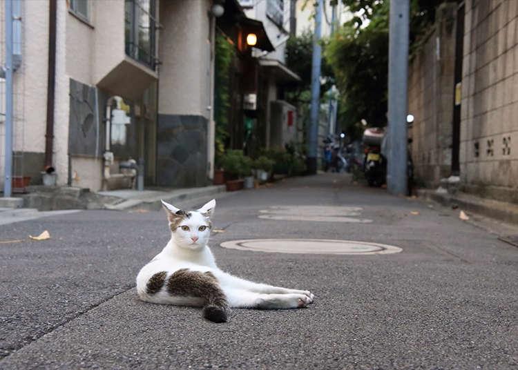 古朴街道与猫的合照