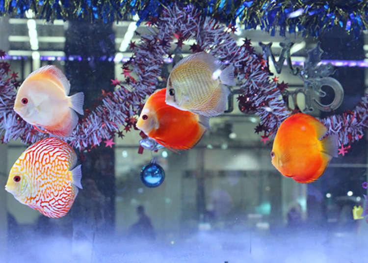 Kedai ikan tropika yang terbesar di Tokyo