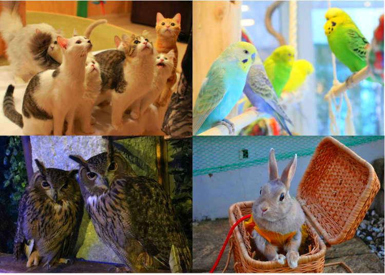 東京で一度は行きたい人気の動物カフェ8選