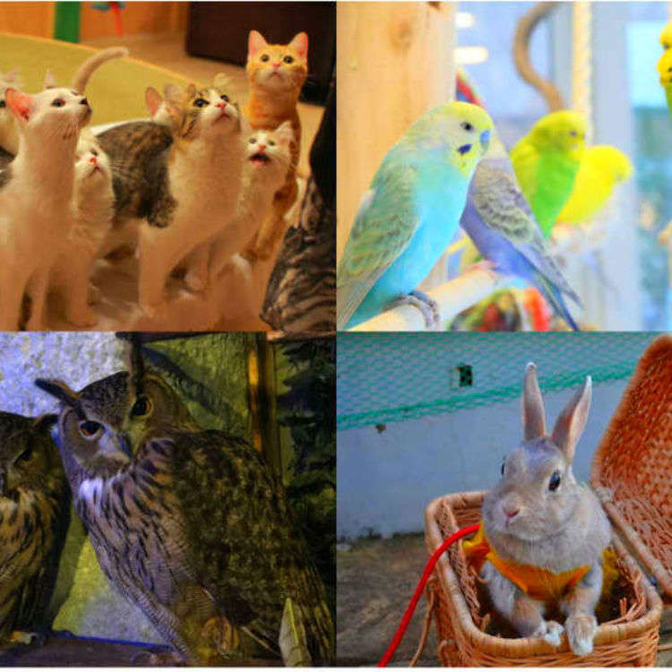 Tokyo's Top Animal Cafes