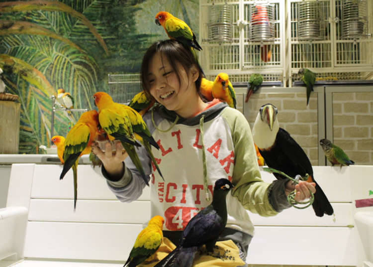 鳥のいるカフェ:鳥まみれになれる!