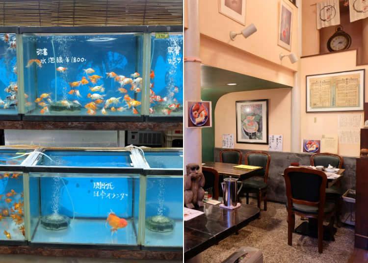 金魚坂:色とりどりの金魚を観賞できるカフェ