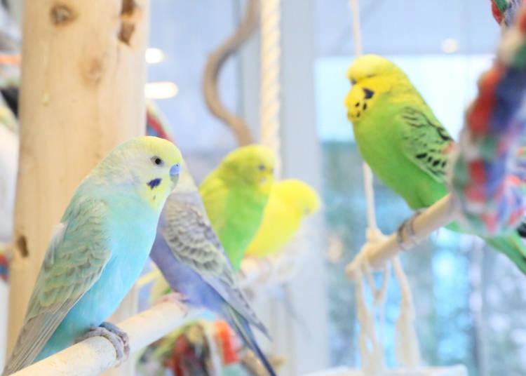 ことりカフェ:キュートな小鳥&絶品デザートを堪能