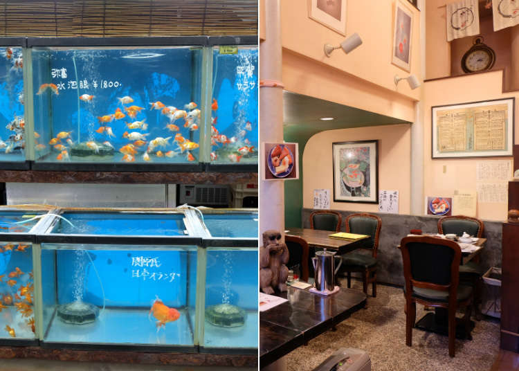 Ikan emas berwarna-warni berenang