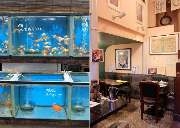 五彩缤纷的金鱼在畅游