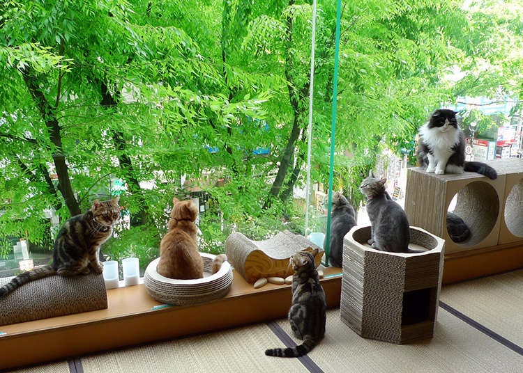 癒し度120%のカフェ「ハピ猫」
