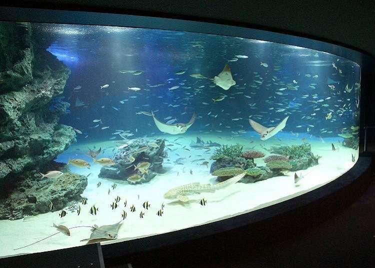 魚跟海獅的表演充滿看頭