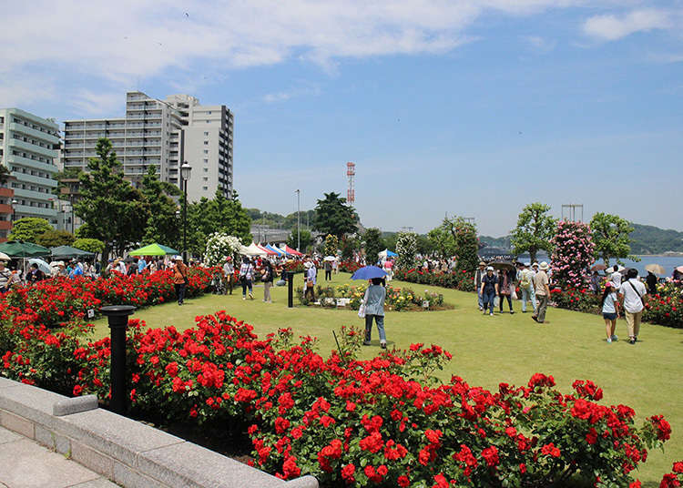 A French garden facing the Port of Yokosuka