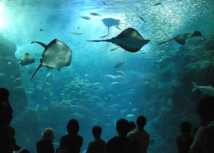 Enoshima Aquarium is a popular soothing spot