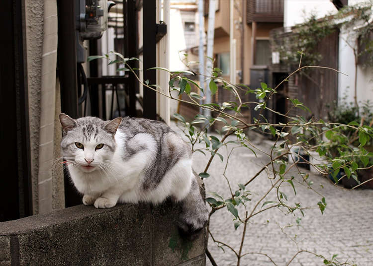 用3小時盡情遊覽「神樂坂」,感受日本的精粹吧!