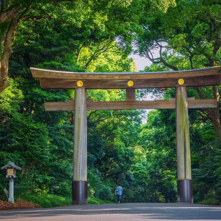 生存着3000种动植物!?巡游明治神宫的森林