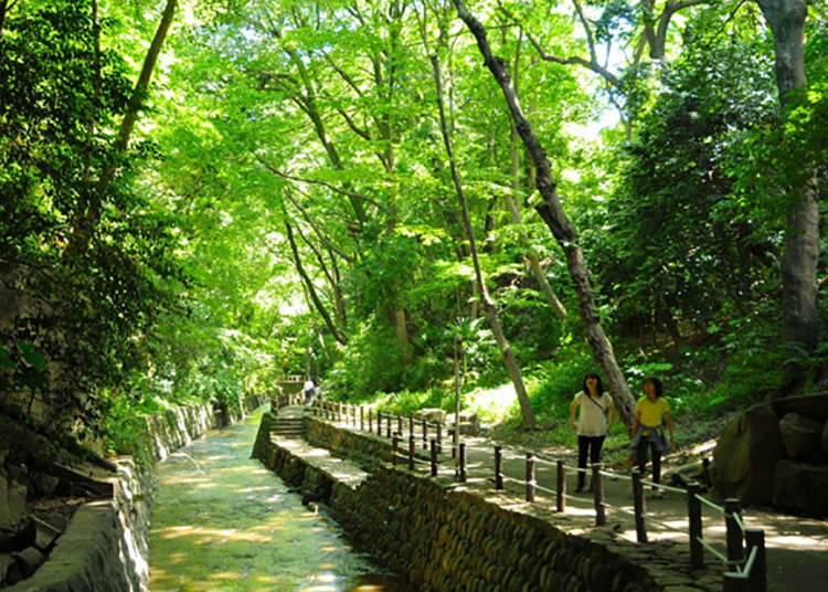 Time to relax in the water and plant-filled Todoroki Keikoku Ravine