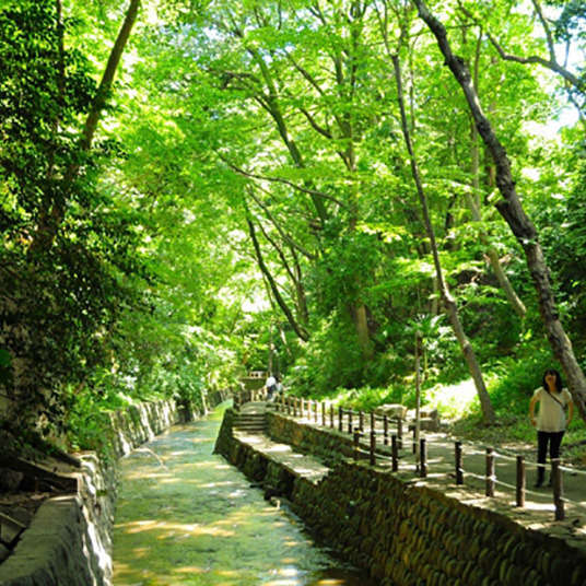 Relax at Todoroki Keikoku Ravine, a Paradise of Plants and Water