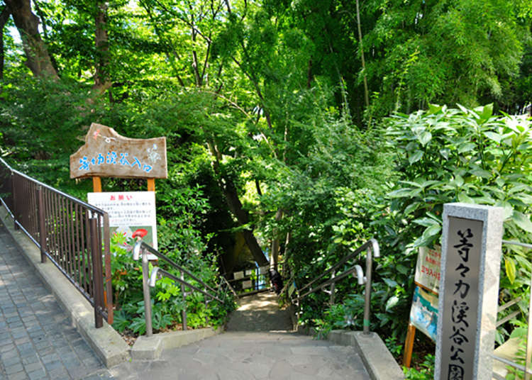 東京都內唯一的溪谷!稀有的自然景點