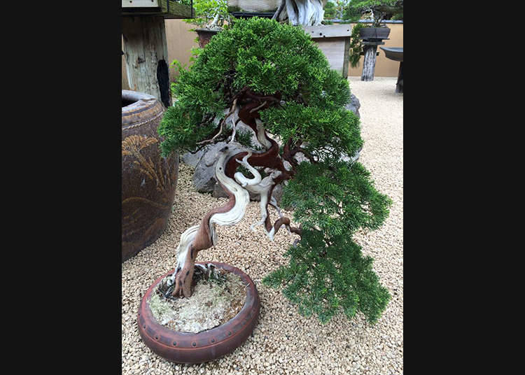 Turning a Tree into a Bonsai