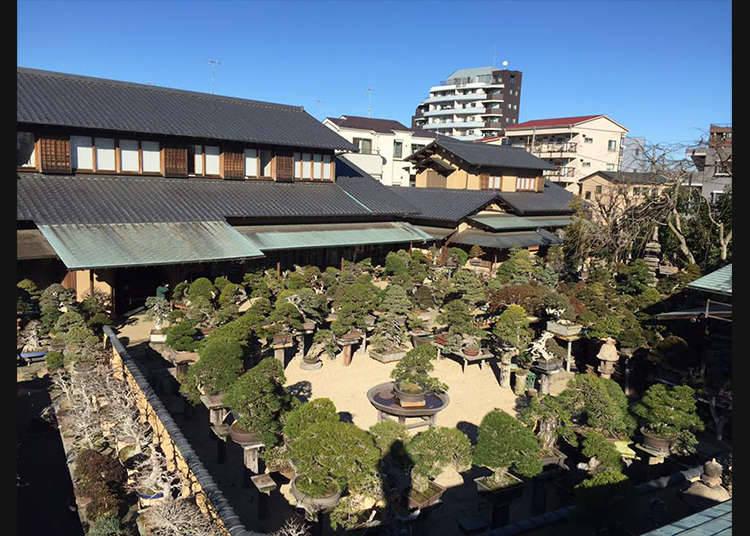 Mengamati Aneka Bonsai di Shunkaen Bonsai Museum