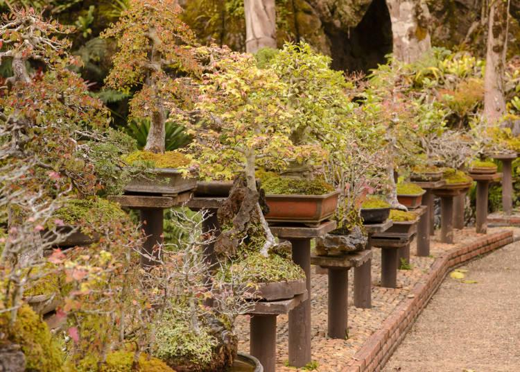 盆栽の歴史