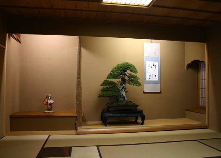 Pengalaman bonsai yang sebenar
